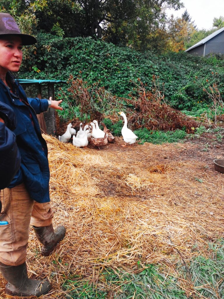 Able Farms Ducks