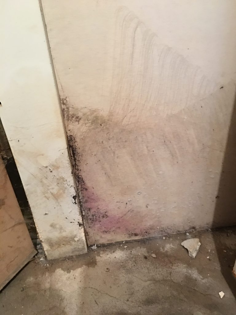 Mold damage in the basement that seemed to contribute to my chronic fatigue syndrome
